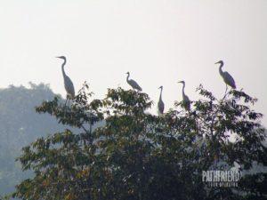 Birds of Sundarban